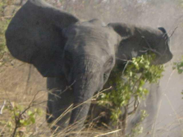 éléphant au burkina faso lors d'un safari photo