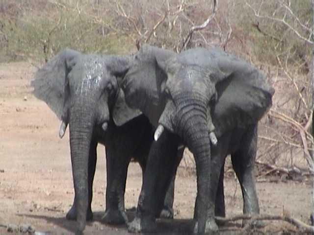 safari photo voyages randonnée découverte nature sauvage